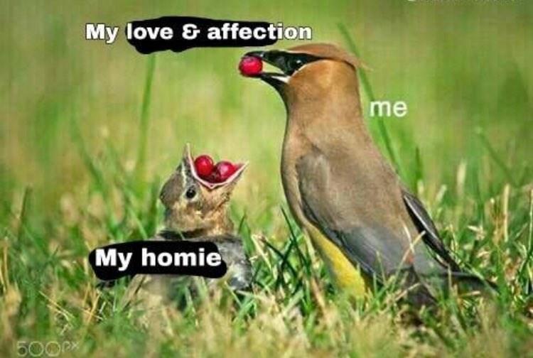 Bird - My love & affection me My homie 5000