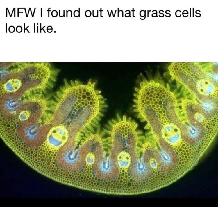 Organism - MFW I found out what grass cells look like.