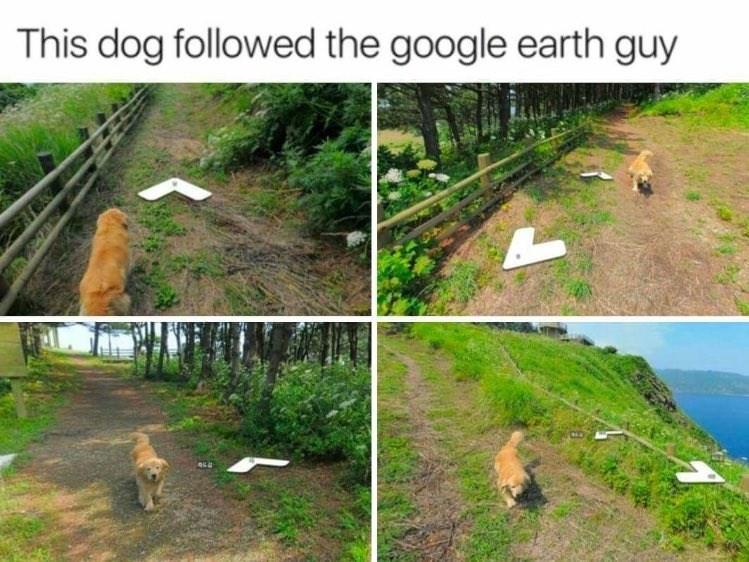 Vegetation - This dog followed the google earth guy