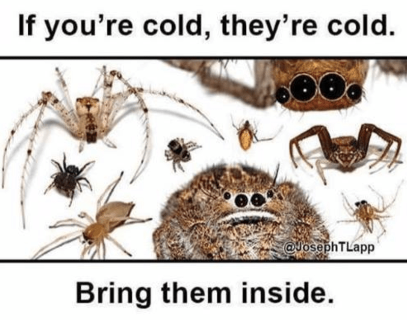 funny meme about bringing in spiders from the cold.