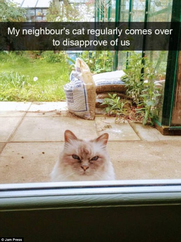 meme - Cat - My neighbour's cat regularly comes over to disapprove of us 0 SAND ND AST OJam Press