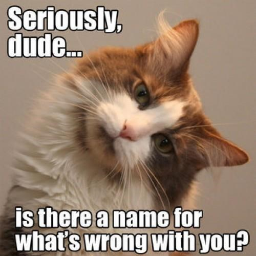 meme - Cat - Seriously, dude.. is there a name for what's wrong with you?