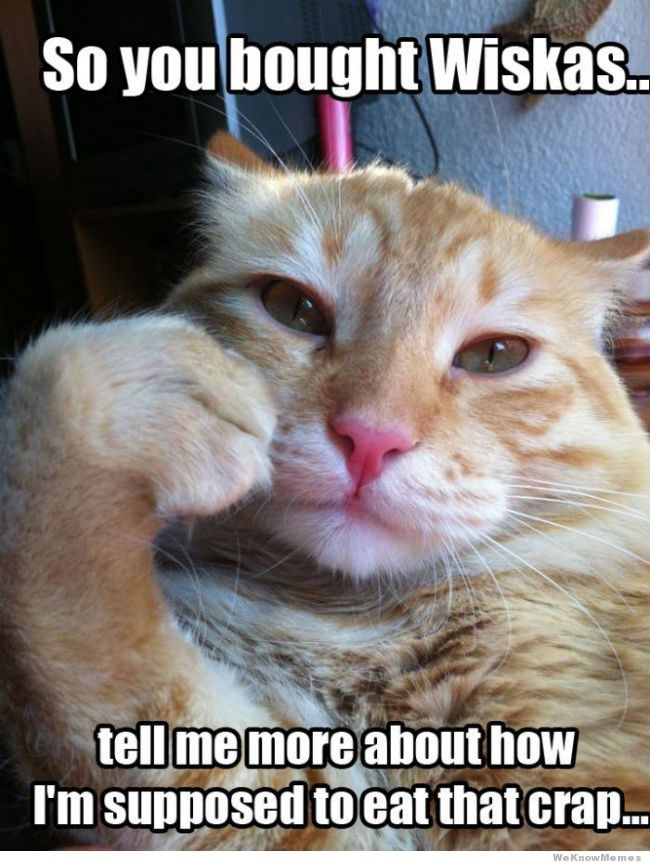 meme - Cat - So you bought Wiskas tell me more about how I'm supposed to eat that cra.. We KnowMemes