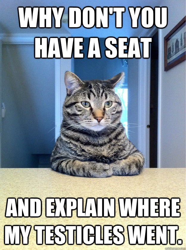 meme - Cat - WHY DON'T YOU HAVE A SEAT AND EXPLAIN WHERE MY TESTICLES WENT. quickmeme.com