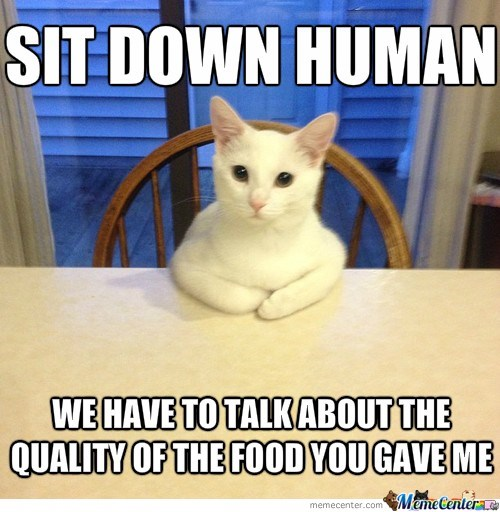 meme - Cat - SIT DOWN HUMAN WE HAVE TO TALKABOUT THE QUALITY OF THE FOOD YOUGAVE ME MameCentere memecenter.com