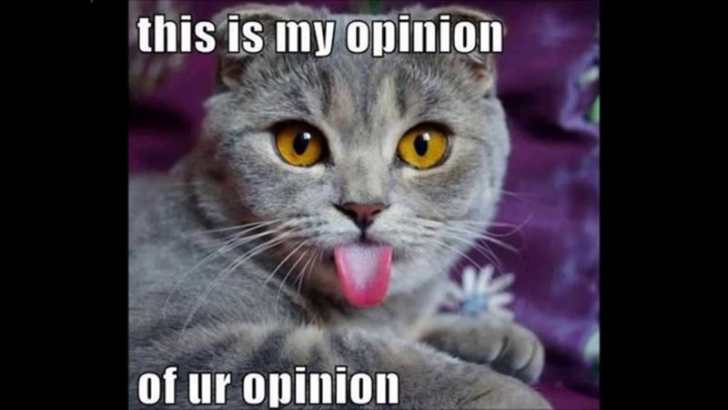 meme - Cat - this is my opinion of ur opinion