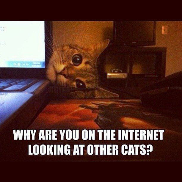 meme - Cat - WHY ARE YOU ON THE INTERNET LOOKING AT OTHER CATS?