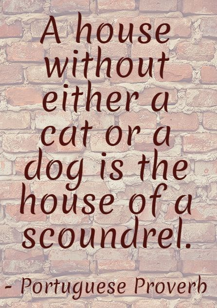 Font - A house without either a cat or a dog is the house of a scoundrel. Portuguese Proverh
