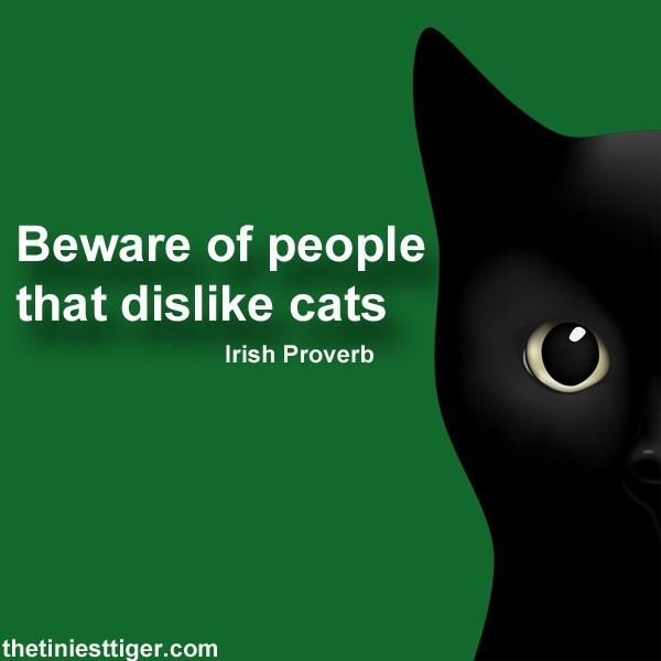 Cat - Beware of people that dislike cats Irish Proverb thetiniesttiger.com