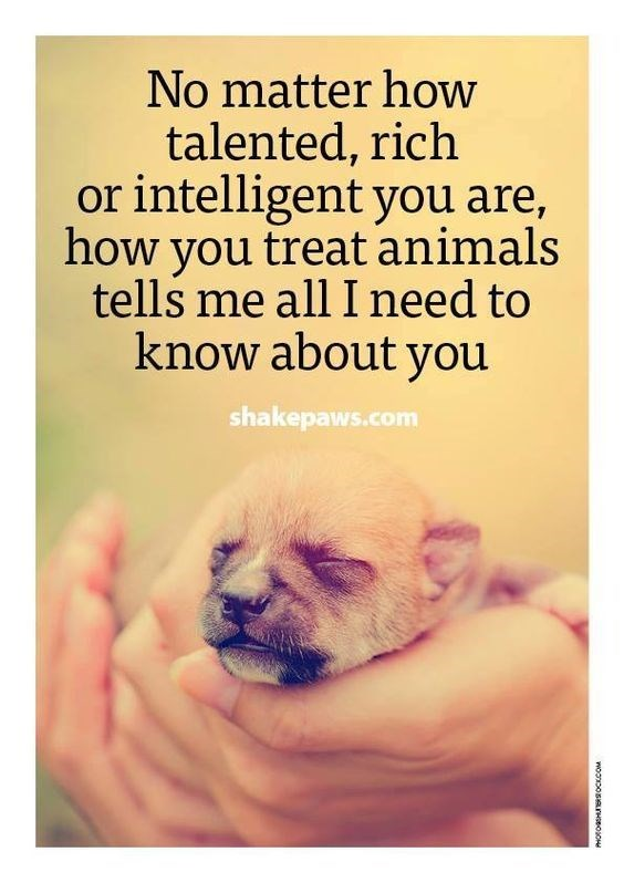 Text - No matter how talented, rich or intelligent you are, how you treat animals tells me all I need to know about you shakepaws.com woonposerseoOHe
