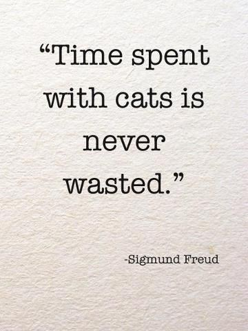 """Text - """"Time spent with cats is never wasted."""" Sigmund Freud"""