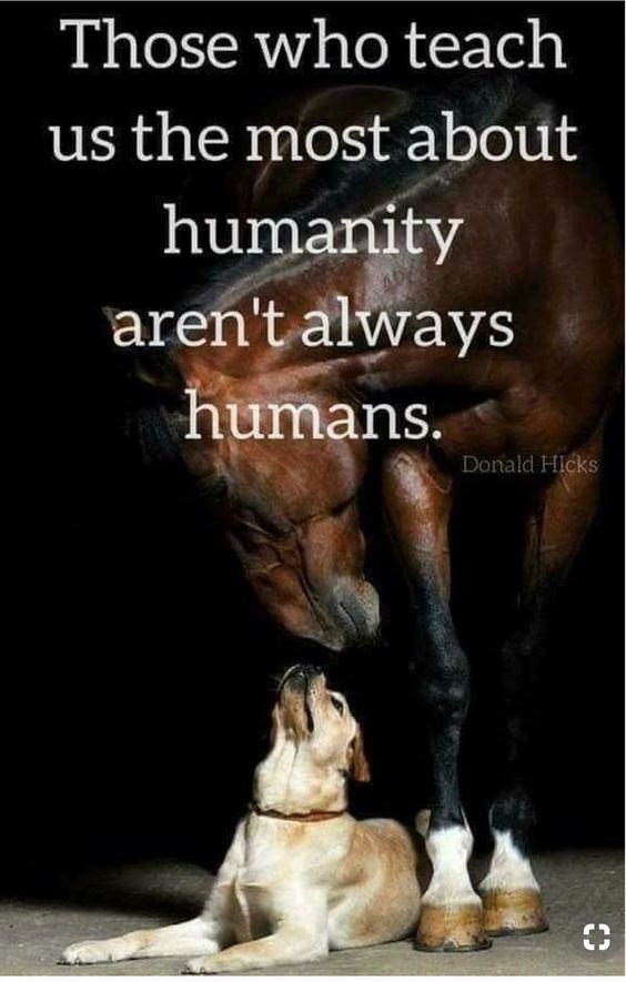 Text - Those who teach us the most about humanity aren't always humans. Donald HIcks