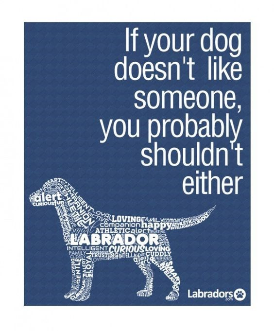 Dog - If your dog doesn't like someone, you probably shouldn't either OMRRANTLOvALLOVINGEAMILYCOMpani alert CURIOUS un SCT ESmpanion häppy ATHLETICalerfiaustiNG VABRADOR INTELLIGENT CURIOUSLOVING FAMILY oANSO CUDDAY RUSTING NTELLIGENTCUDDLY ROVINGEIN alendcuRiUs Labradors com TIC RIOL