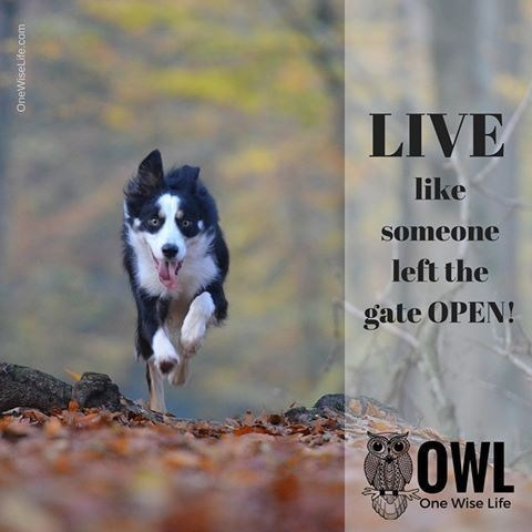 Dog - LIVE like someone left the gate OPEN! OWL One Wise Life ww.wem.te.coMauo