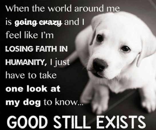 Dog breed - When the world around me is going crazy and I feel like I'm LOSING FAITH IN HUMANITY, I just have to take one look at my dog to know... GOOD STILL EXISTS