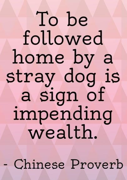 Font - To be followed home by a stray dog is a sign of impending wealth. - Chinese Proverb