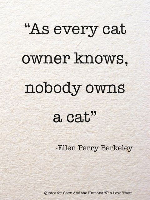"""Text - """"As every cat owner knows, nobody owns a cat"""" -Ellen Perry Berkeley Quotes for Cats: And the Humans Who Love Them"""