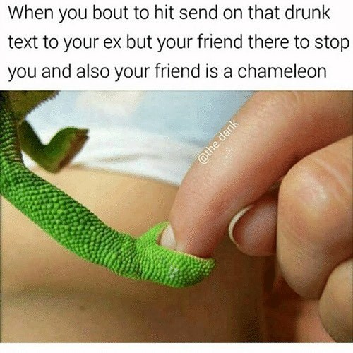meme - Green - When you bout to hit send on that drunk text to your ex but your friend there to stop you and also your friend is a chameleon @the.dank