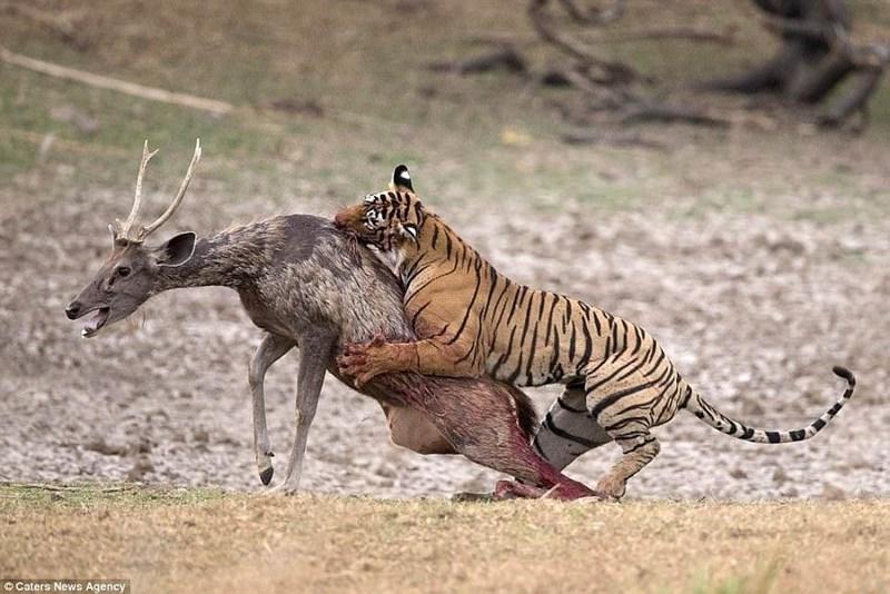 Mammal - OCaters News Agency