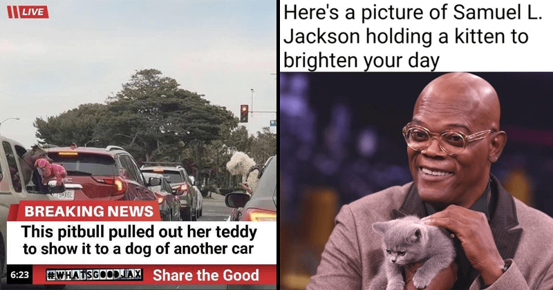 Wholesome memes and tweets, Samuel L. Jackson holding a kitten, dog showing another dog their stuffed animal through car window.