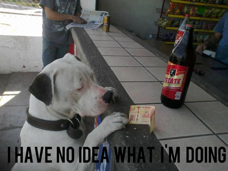 Dog breed - ok ECATE Bapco de Mexico PSS30413 IHAVE NO IDEA WHAT IM DOING O0