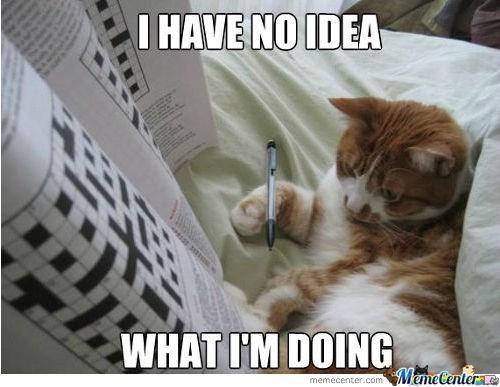 Cat - I HAVE NO IDEA WHAT I'M DOING MemeCenter e memecenter.com