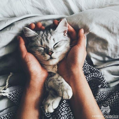 Cat - CATSOFINSTACRAM.COM CATSOFINSTAORAM