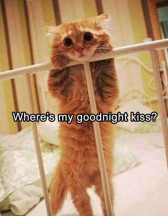 Fur - Where's my goodnight kiss?