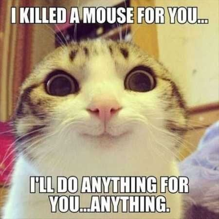 Cat - IKILLED A MOUSE FOR YOU.. LL DO ANYTHING FOR YOU..ANYTHING