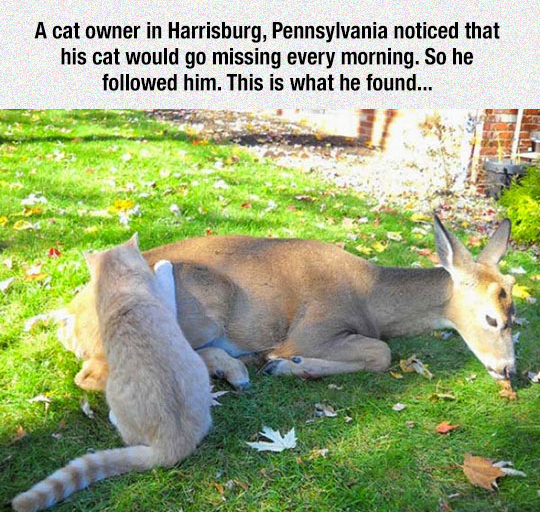 Kangaroo - A cat owner in Harrisburg, Pennsylvania noticed that his cat would go missing every morning. So he followed him. This is what he found...