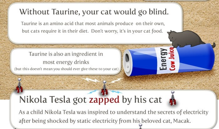 Text - Without Taurine, your cat would go blind. Taurine is an amino acid that most animals produce on their own, but cats require it in their diet. Don't worry, it's in your cat food. Taurine is also an ingredient in most energy drinks (but this doesn't mean you should ever give these to your cat) Nikola Tesla got zapped by his cat As a child Nikola Tesla was inspired to understand the secrets of electricity after being shocked by static electricity from his beloved cat, Macak. Energy Cow Juice