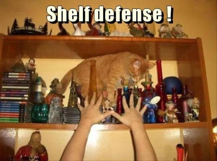 Caturday meme about a cat defending itself on a shelf