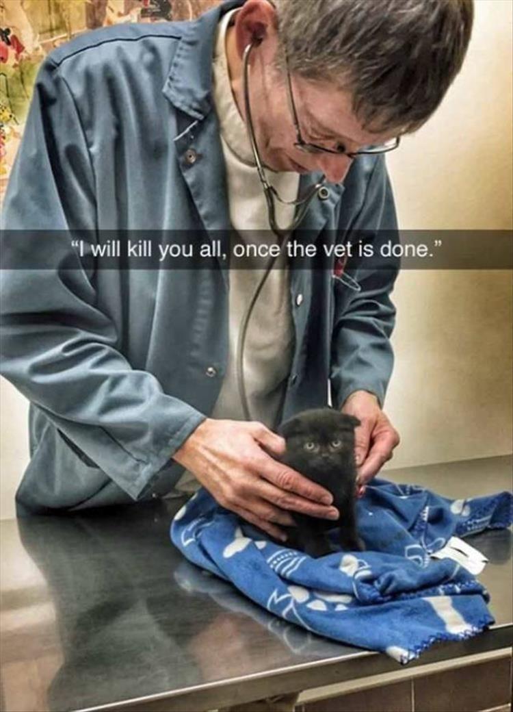 Caturday meme with a murderous kitten taken to the vet
