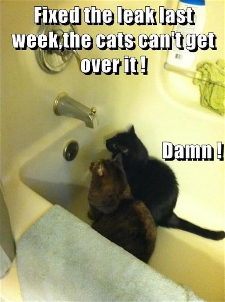 Caturday meme about cat making use of a leaky faucet