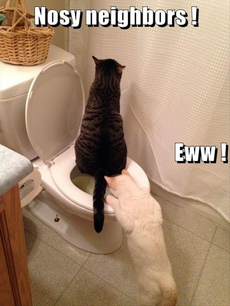 Caturday meme of a cat watching another cat on the toilet
