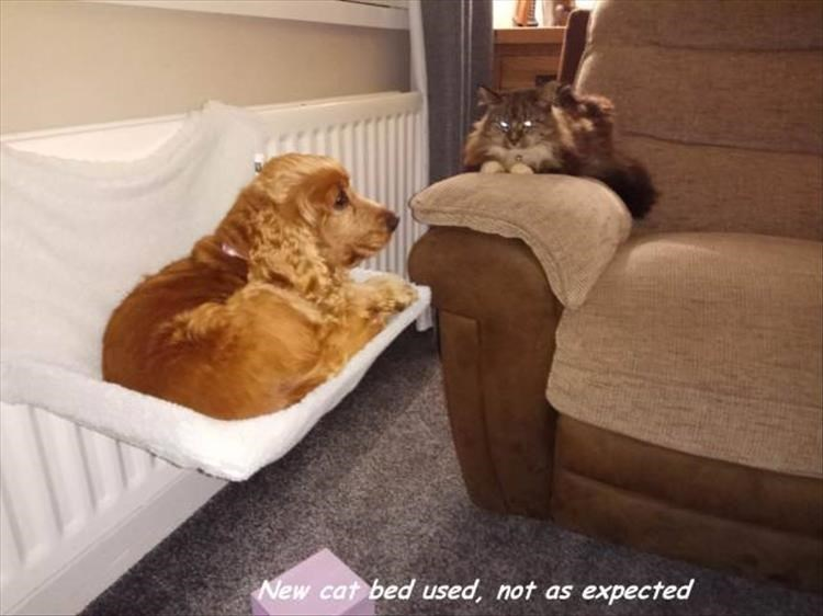 Caturday meme of a dog using the cat bed