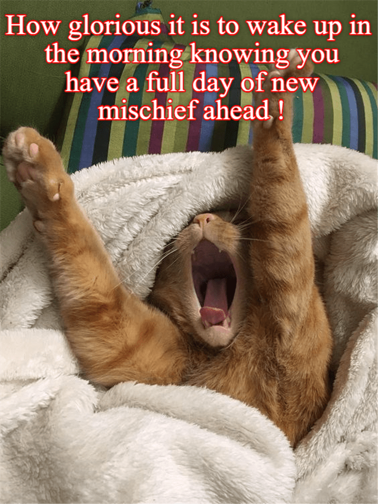 Caturday meme about cats spending their days doing mischievous things