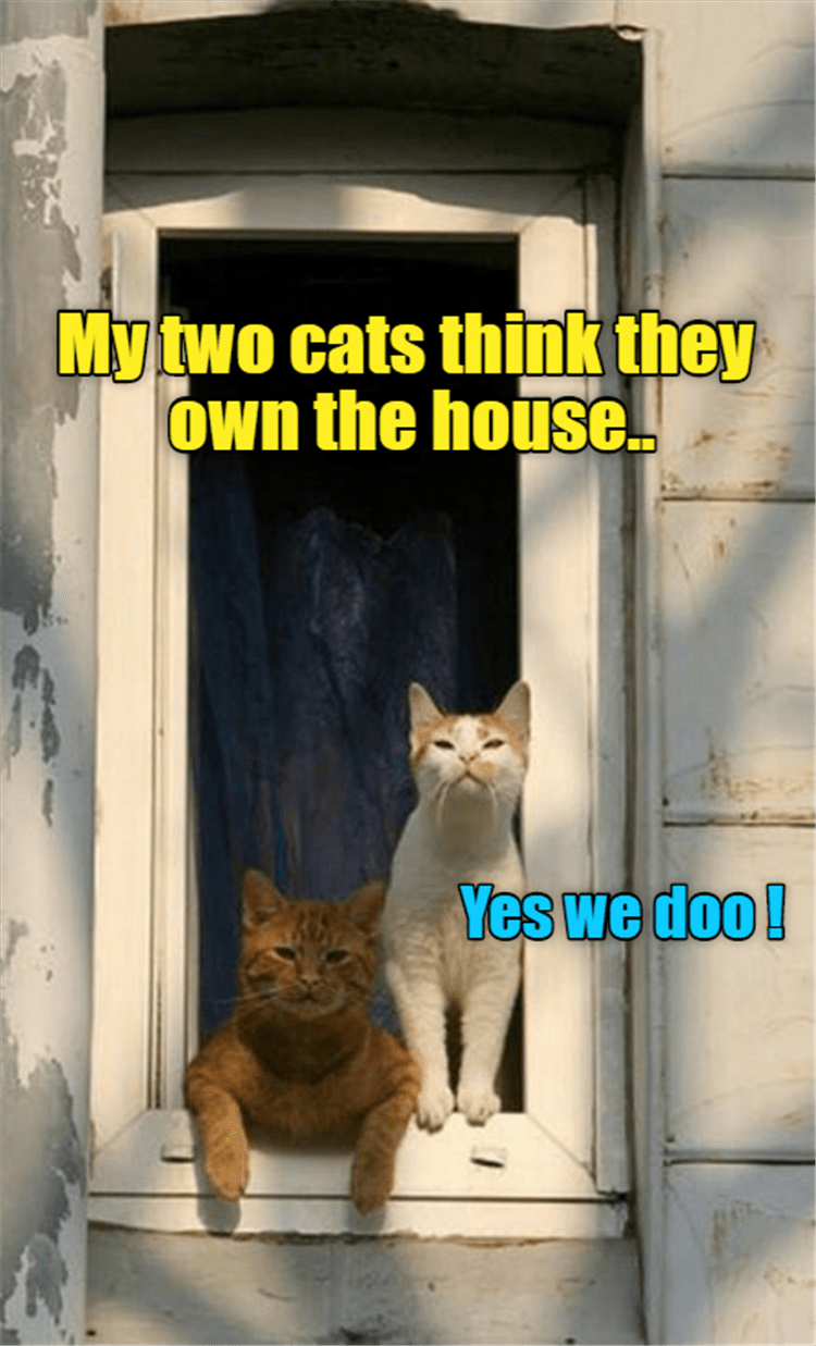 Caturday meme about cats thinking the own the house