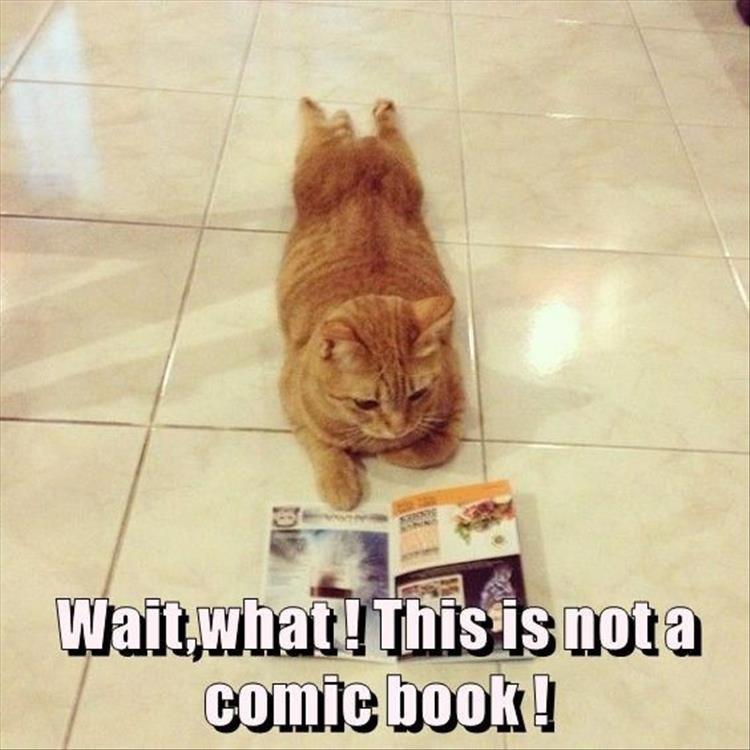 Caturday meme of a cat reading a magazine