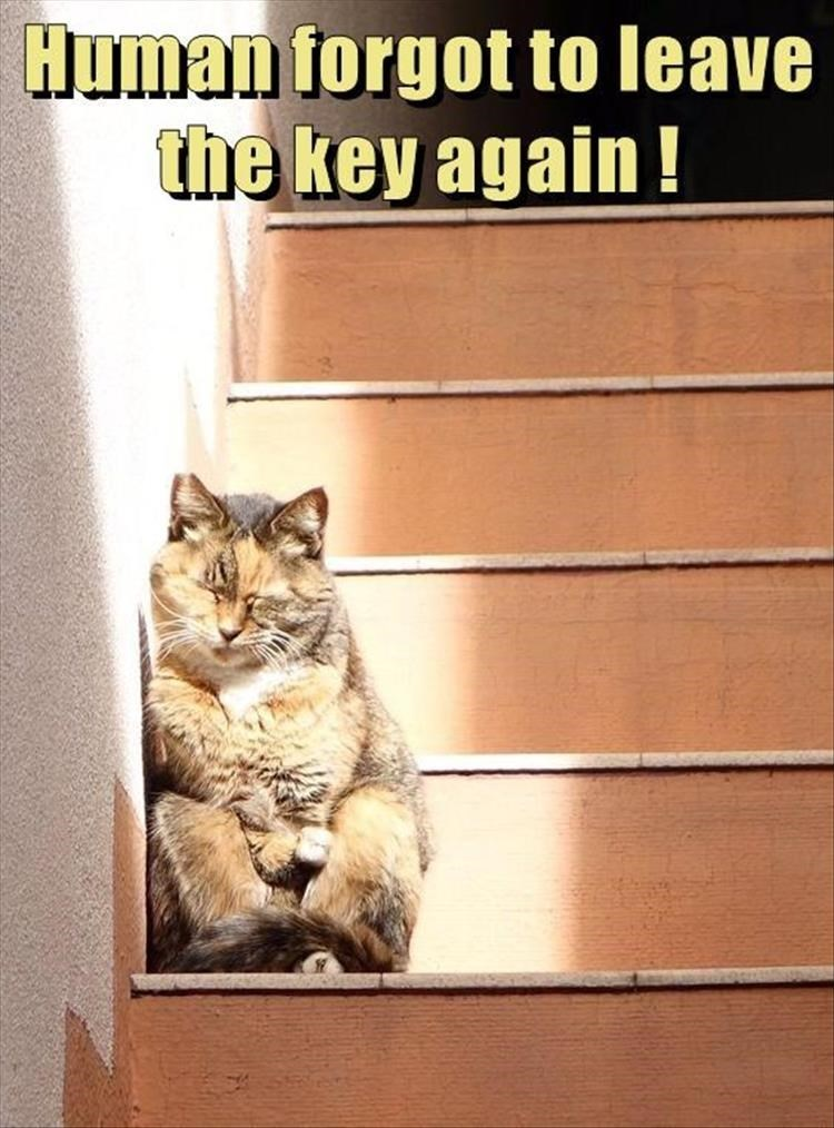Caturday meme about a cat getting locked outside the house