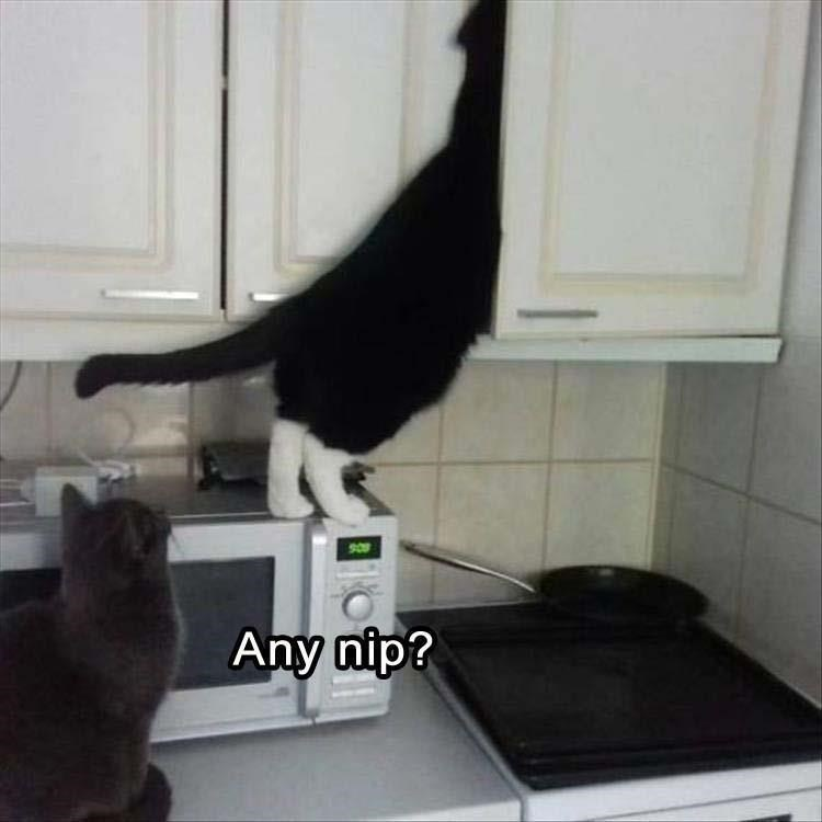 Caturday meme about cats climbing into cupboard in search of catnip