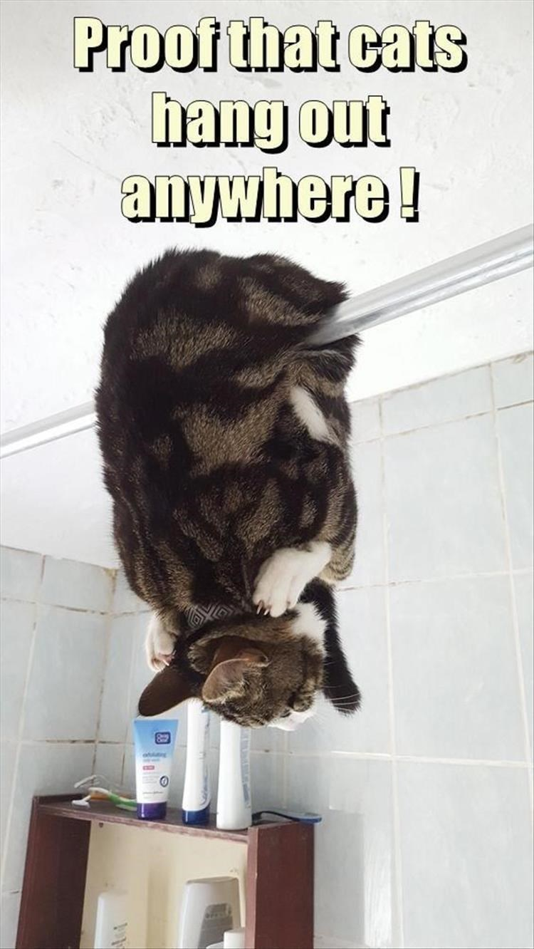 Caturday meme of a cat hanging from a shower curtain rod