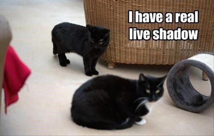 Caturday meme of a black cat acting as a shadow to another cat