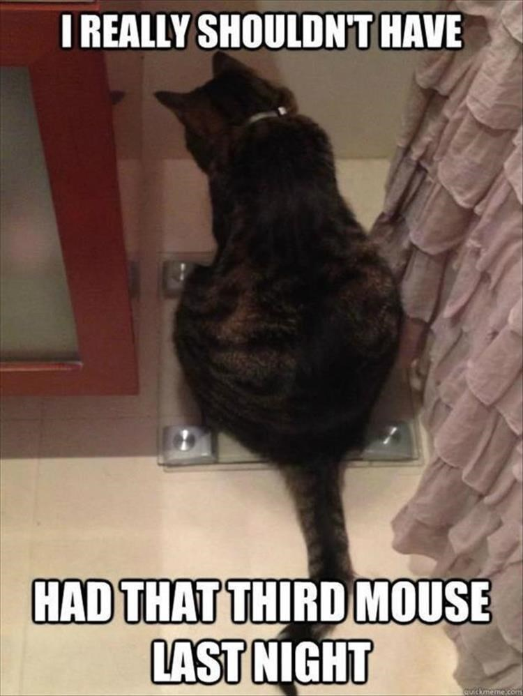 Caturday meme of cat sitting on scale regretting the last meal it had