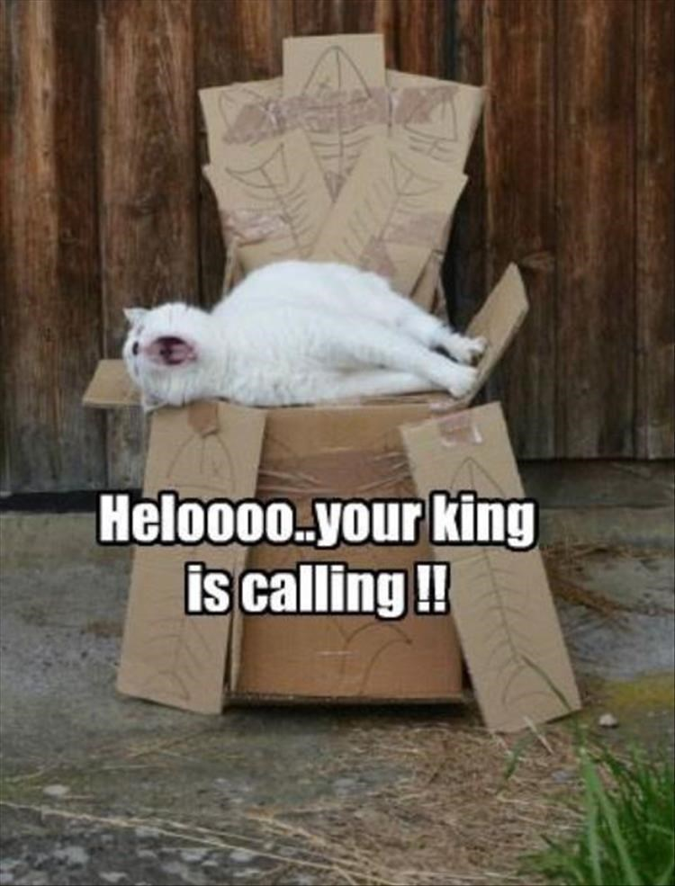 Caturday meme of a king cat sitting on a cardboard throne