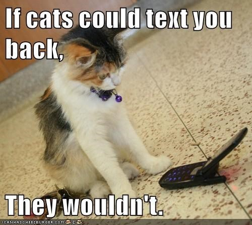 Cat - If cats could text you back, They wouldn't
