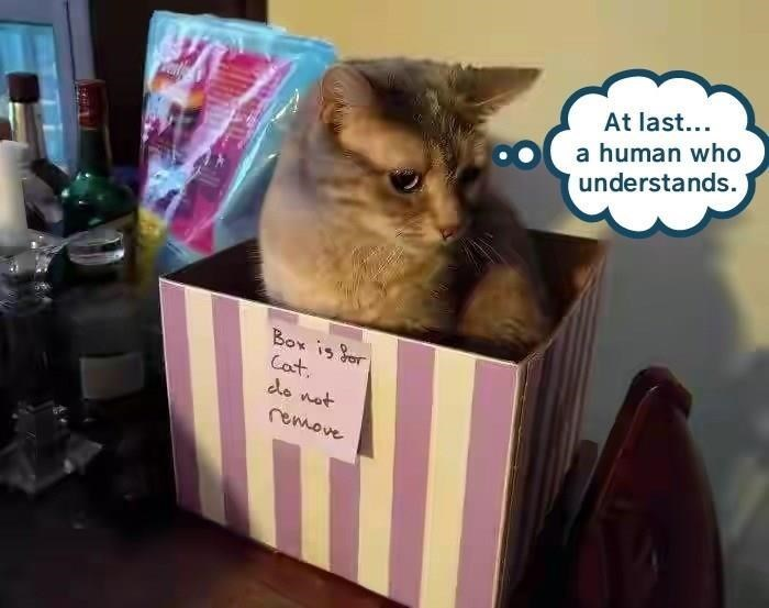 Cat - At last... a human who understands. Box is Sor Cat do not remove