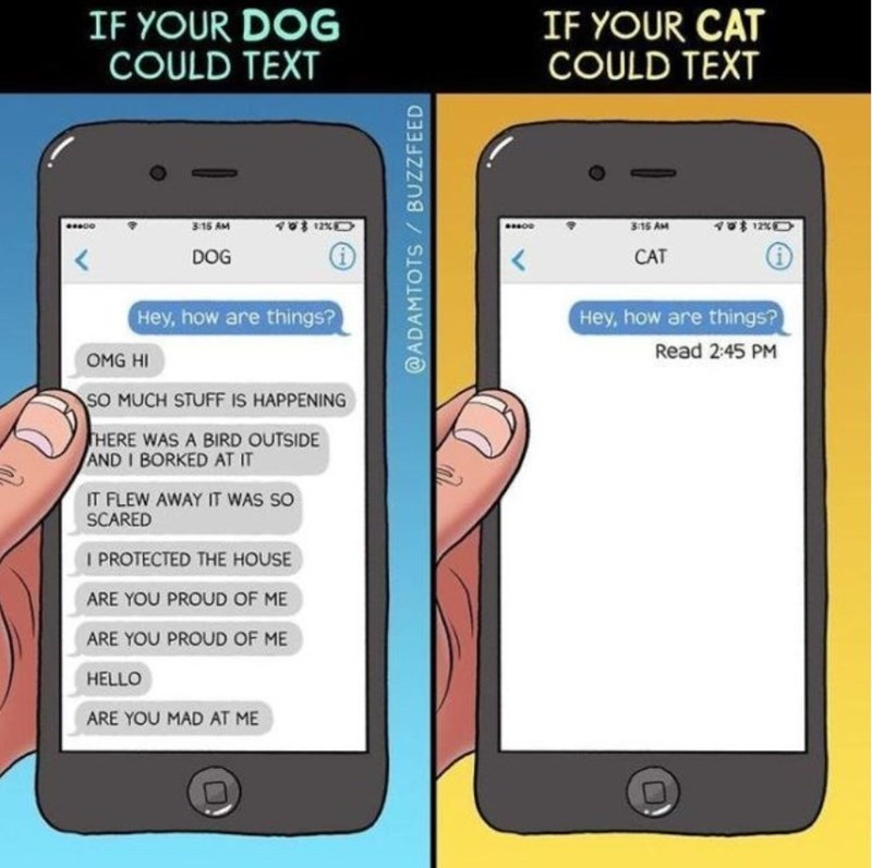 Mobile phone - IF YOUR DOG COULD TEXT IF YOUR CAT COULD TEXT 3 15 AM 12%0 12% 3:15 AM CAT < DOG < Hey, how are things? Hey, how are things? Read 2:45 PM OMG HI SO MUCH STUFF IS HAPPENING THERE WAS A BIRD OUTSIDE AND I BORKED AT IT IT FLEW AWAY IT WAS SO SCARED I PROTECTED THE HOUSE ARE YOU PROUD OF ME ARE YOU PROUD OF ME HELLO ARE YOU MAD AT ME @ADAMTOTS BUZZFEED