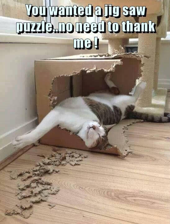 Floor - You wanteda Jig saw puzZle..no needto thank me!