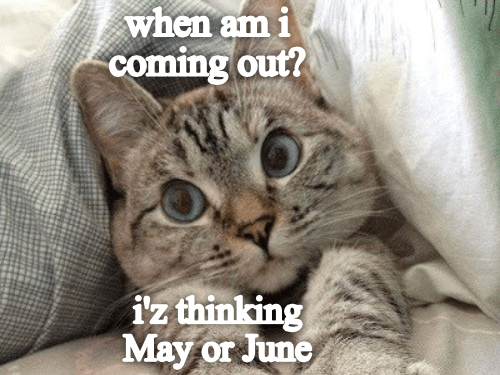 Cat - when am i coming out? iz thinking May or June